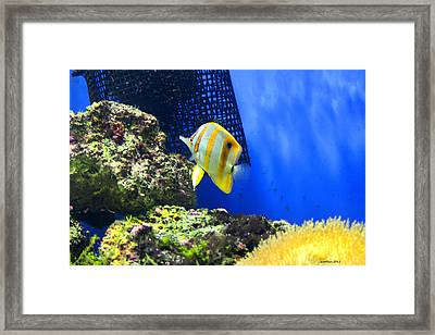 Colour My World Framed Print by Dick Botkin