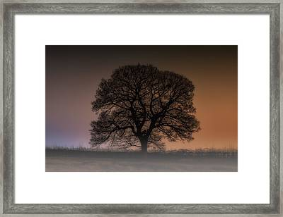 Framed Print featuring the photograph Colour Tree by Stewart Scott