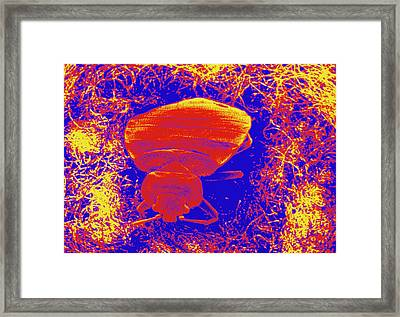 Coloured Sem Of Bed Bug Emerging From Mattress. Framed Print by Cath Wadford/science Photo Library