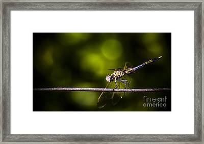 Colourful Australian Dragonfly At Insect Crossing Framed Print