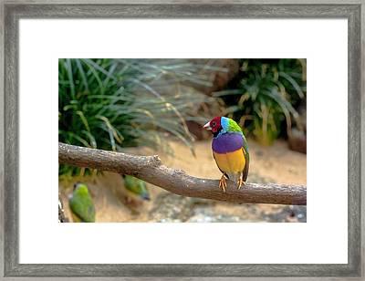 Colourful Bird Framed Print by Daniel Precht