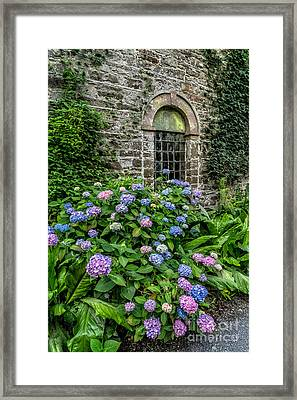 Colourful Hydrangeas Framed Print by Adrian Evans