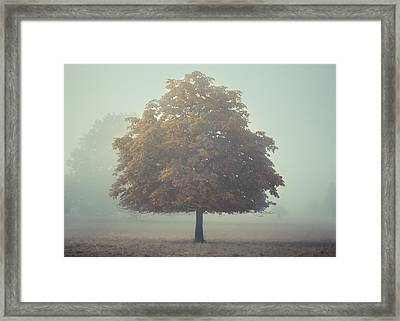 Colourful Stand Out Framed Print by Chris Fletcher