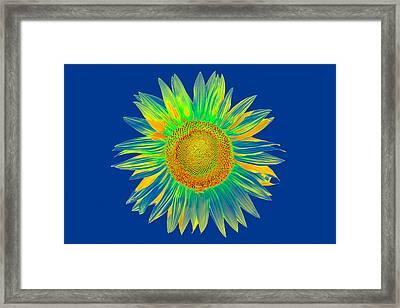 Colourful Sunflower Framed Print