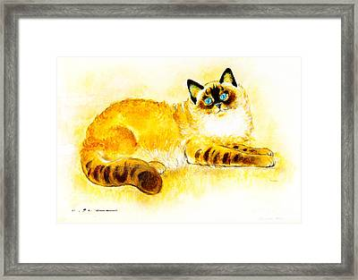 Colourpoint Cat Framed Print by Kurt Tessmann