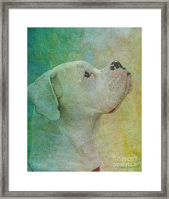 Colours Framed Print by Judy Wood