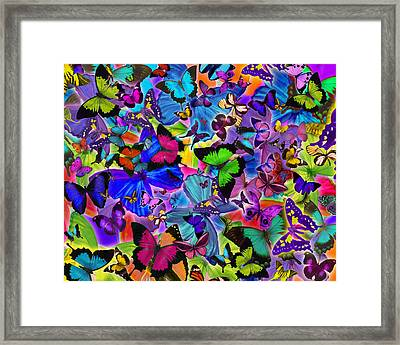 Colours Of Butterflies Framed Print by Alixandra Mullins