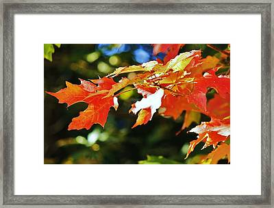 Framed Print featuring the photograph Colours Of Fall by Al Fritz