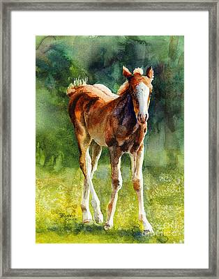 Colt In Green Pastures Framed Print by Bonnie Rinier