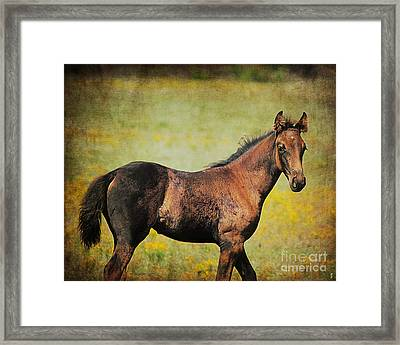 Colt In The Meadow I Framed Print by Jai Johnson