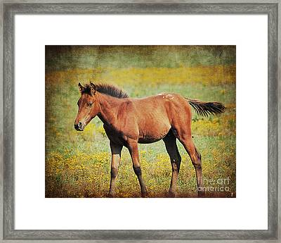 Colt In The Meadow II Framed Print by Jai Johnson