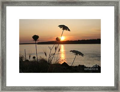Columbia Gorge Sunset Framed Print by Cari Gesch