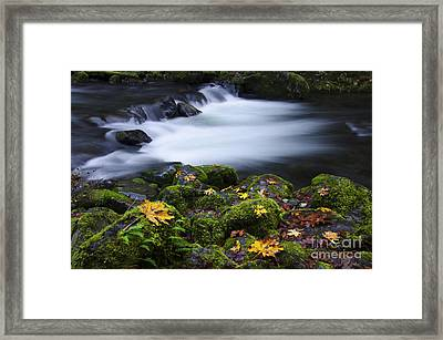 Columbia River Gorge Tanner Creek 1 Framed Print by Bob Christopher