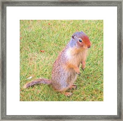 Columbian Ground Squirrel Framed Print by Cathy Long