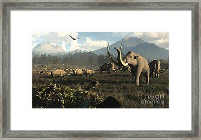 Columbian Mammoths And Bison Roam Framed Print