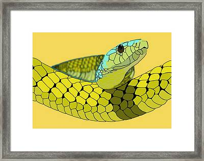 Columbian Snake Framed Print by Katelyn Sherman