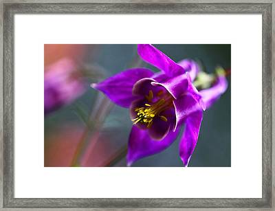 Columbine Abstract Framed Print