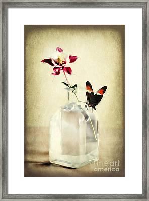 Columbine Art Framed Print by Darren Fisher