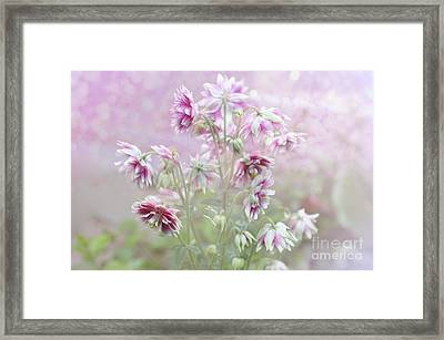 Columbine Beauty Framed Print by Elaine Manley