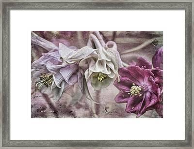 Columbine Beauty Framed Print
