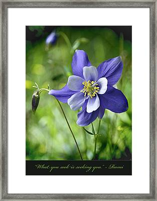 Columbine Card  Framed Print
