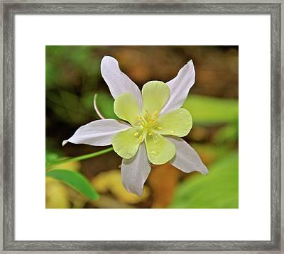 Columbine Charlie's Garden Framed Print