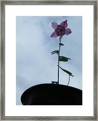Framed Print featuring the photograph Columbine Climb by Brian Boyle