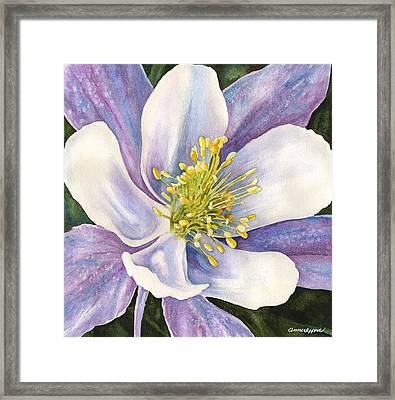 Columbine Closeup Framed Print by Anne Gifford