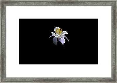 Framed Print featuring the photograph Columbine by David Andersen