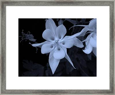 Columbine Flower Framed Print