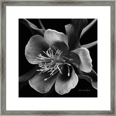 Columbine In Black And White Framed Print