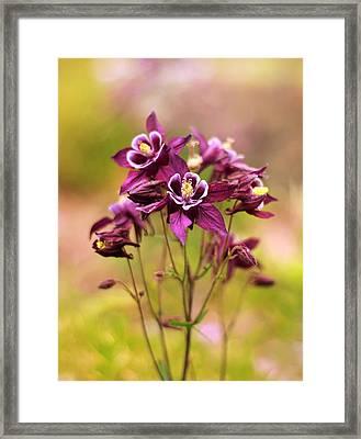 Columbine Framed Print by Jessica Jenney