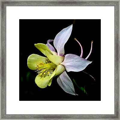 Columbine Framed Print by Jane McIlroy