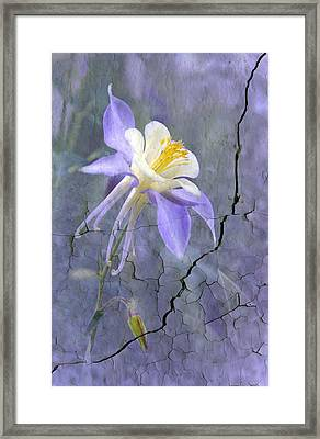 Columbine On Cracked Wall Framed Print by James Steele