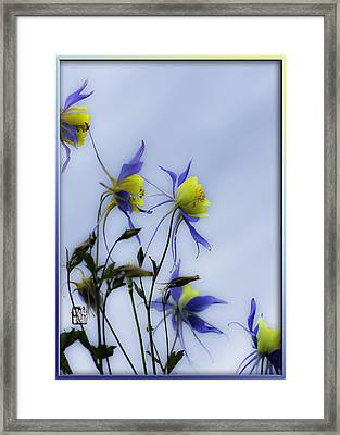 Columbines Framed Print by Peter v Quenter