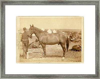 Comanche, The Only Survivor Of The Custer Massacre Framed Print