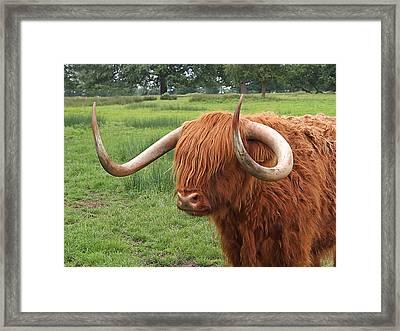 Comb Over - Highland Cow Framed Print by Gill Billington
