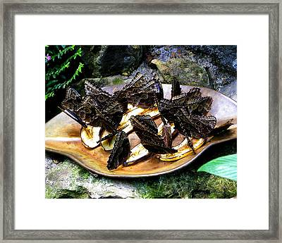 Combat Feeding Framed Print