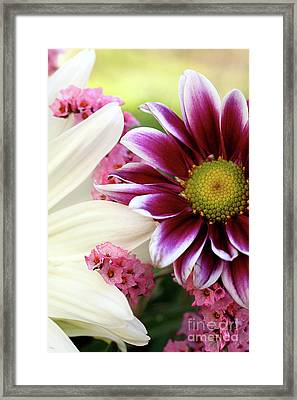 Combining Two Souls  Framed Print by AR Annahita