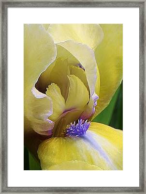 Come A Little Closer Framed Print by Bruce Bley