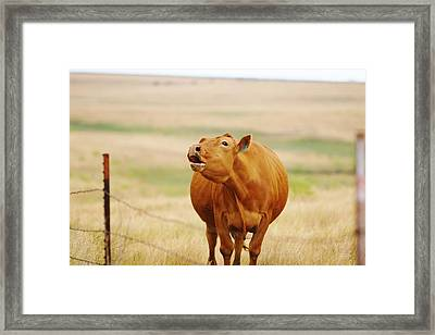 Framed Print featuring the photograph Come And Get It by Shirley Heier