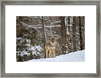 Come Closer Framed Print by Joshua McCullough