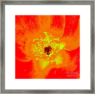 Come Closer Rose Framed Print by Ann Johndro-Collins