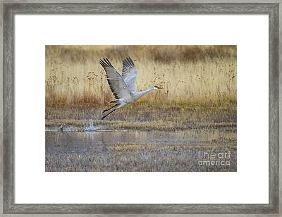 Come Fly With Me Framed Print by Ruth Jolly