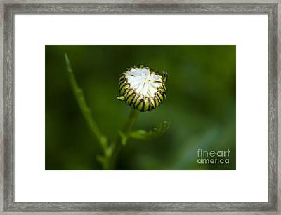 Come Here Framed Print
