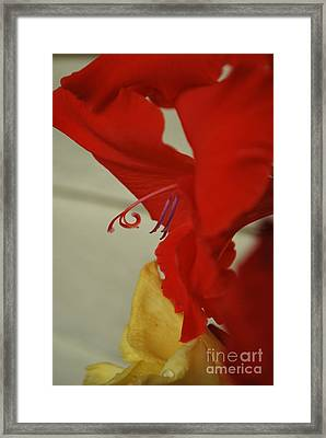 Come Hither Red Framed Print