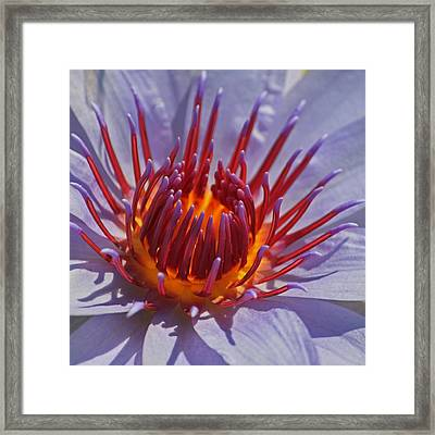 Come Hither Framed Print