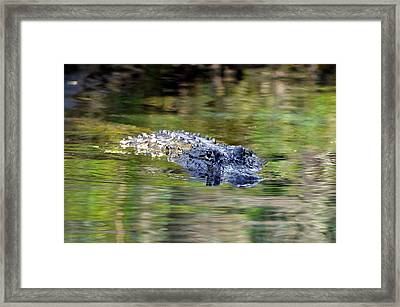 Come No Closer Framed Print