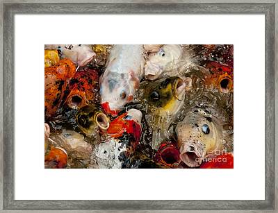 Come On In The Water Is Great Framed Print by Wilma  Birdwell