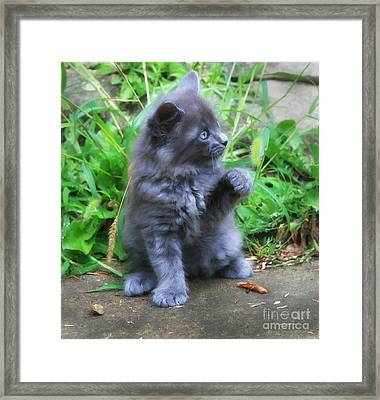 Come On Join The Party Framed Print